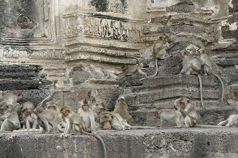 Le Wat Phra Prang Sam Yod, temple de Lopburi